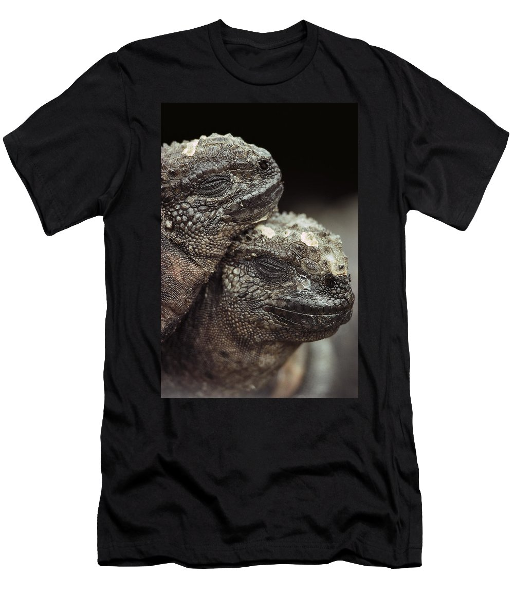 Feb0514 Men's T-Shirt (Athletic Fit) featuring the photograph Marine Iguana Pair Hood Island by Mark Jones