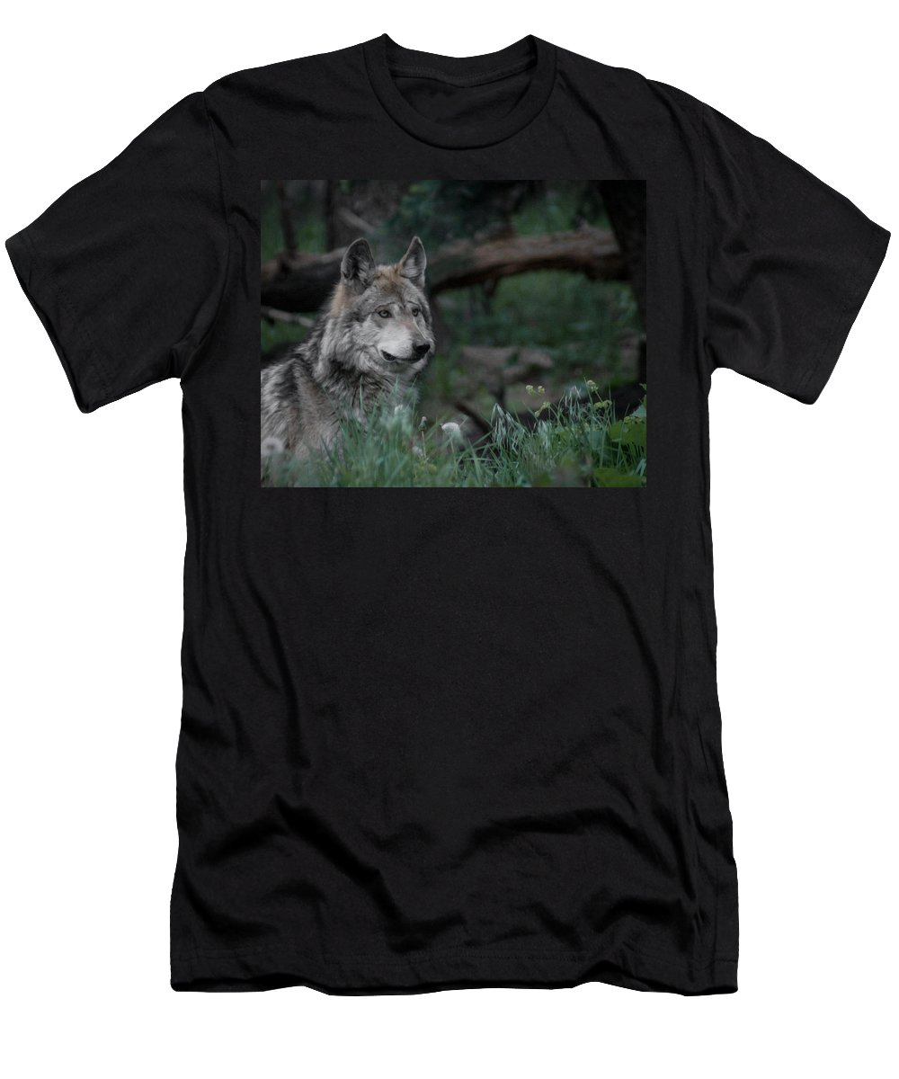 Wolf Men's T-Shirt (Athletic Fit) featuring the digital art Mexican Grey Wolf by Ernie Echols