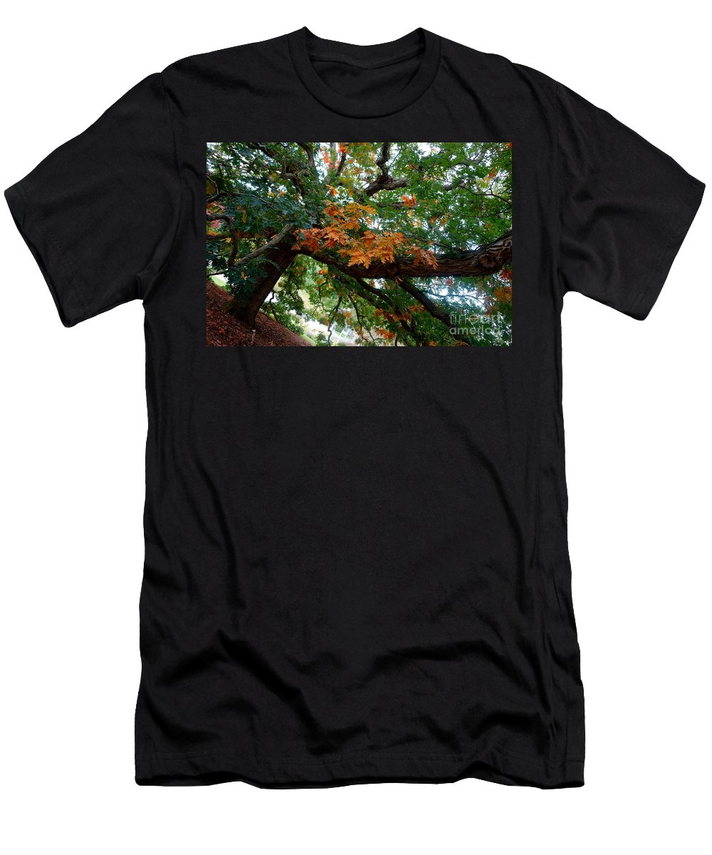 Tree Men's T-Shirt (Athletic Fit) featuring the photograph Mighty Fall Oak #1 by Jacqueline Athmann
