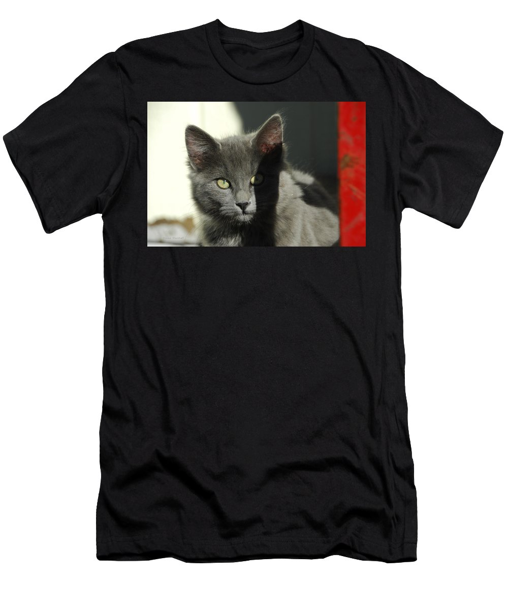 Cat Men's T-Shirt (Athletic Fit) featuring the photograph Mischief by Donna Blackhall