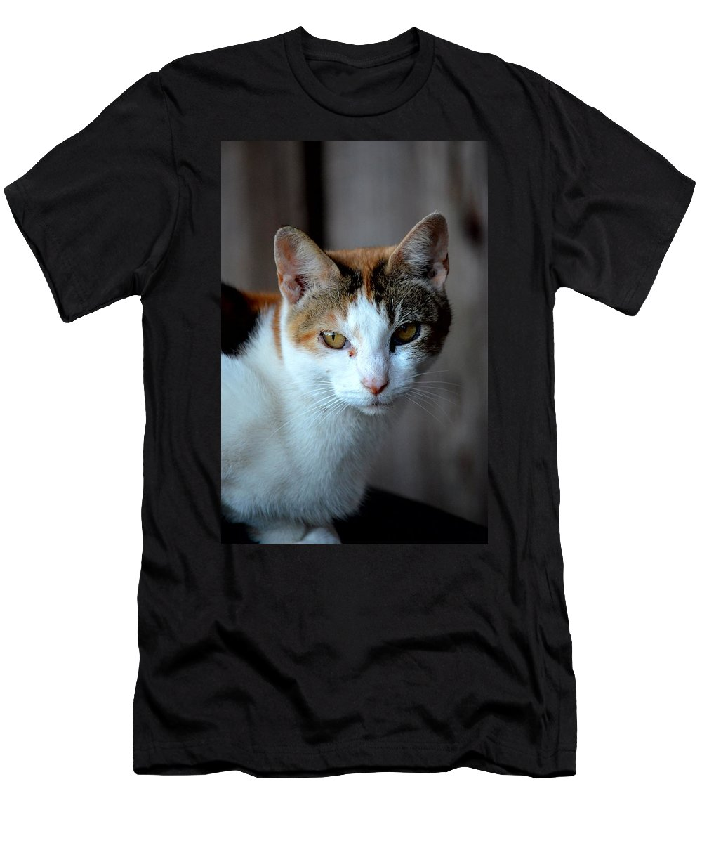 Momma Cat Men's T-Shirt (Athletic Fit) featuring the photograph Momma Cat by Maria Urso