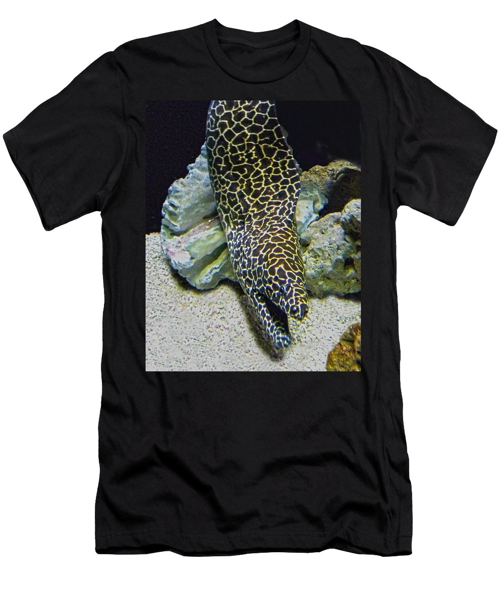 Eel Men's T-Shirt (Athletic Fit) featuring the photograph Moray Eel by Sandi OReilly