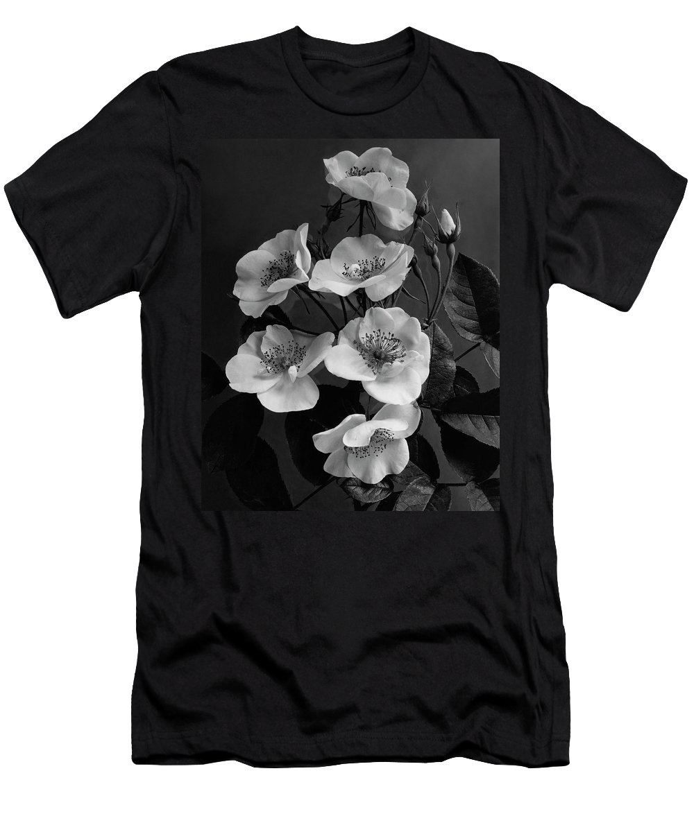Flowers Men's T-Shirt (Athletic Fit) featuring the photograph Moschata Alba by J. Horace McFarland