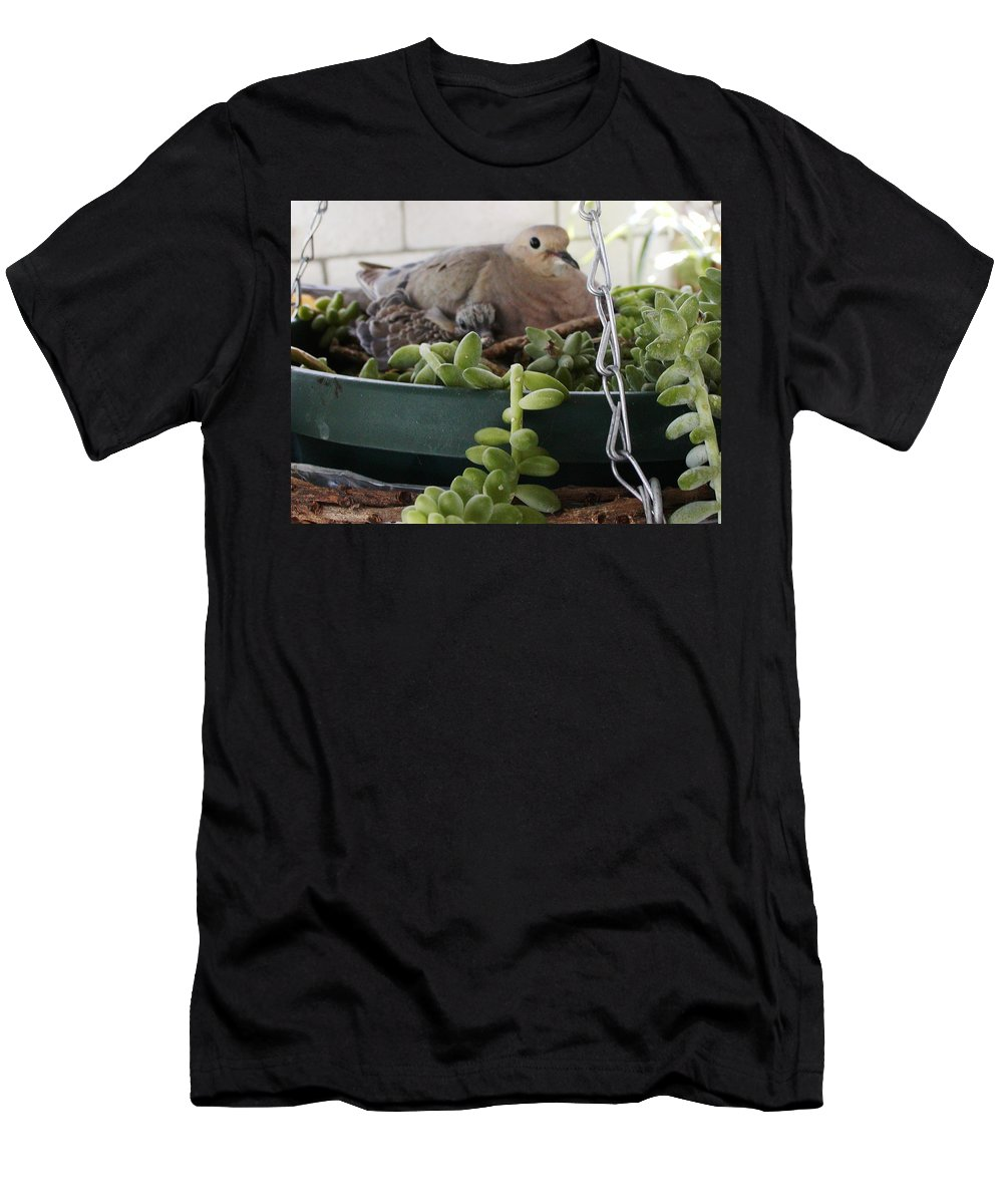 Bird Men's T-Shirt (Athletic Fit) featuring the photograph Mother With Baby Mourning Dove by Jussta Jussta