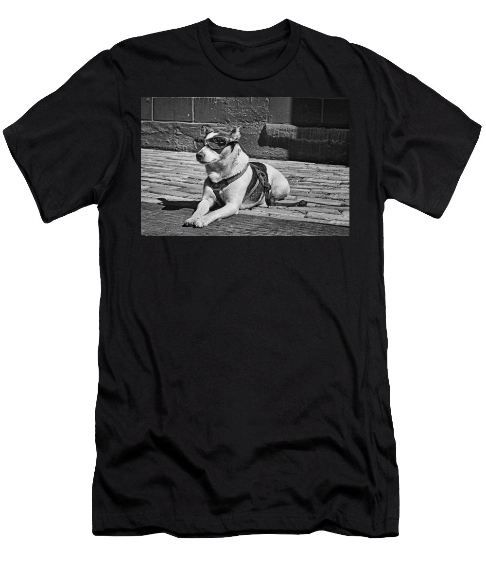 Dog Men's T-Shirt (Athletic Fit) featuring the photograph Mr. Cool by Nikolyn McDonald