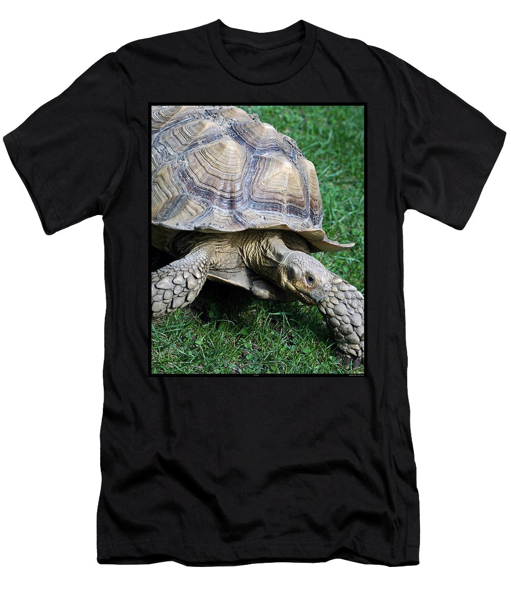 Turtle Men's T-Shirt (Athletic Fit) featuring the photograph Mr. Slowsky by Gene Tatroe