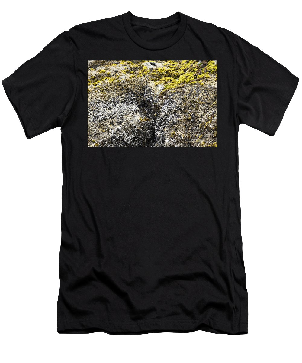 Green Men's T-Shirt (Athletic Fit) featuring the photograph Mussels Barnacles Seaweed Closeup by Lee Serenethos
