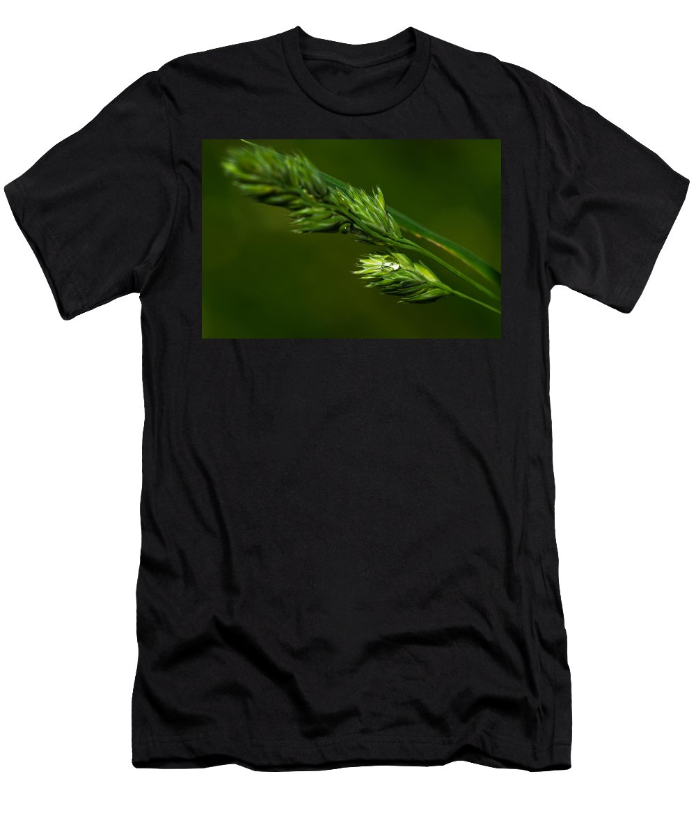 Agriculture Men's T-Shirt (Athletic Fit) featuring the photograph Nesting The Treasure by Alexander Senin