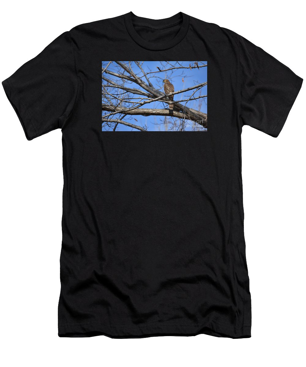 Northern Harrier Prints Men's T-Shirt (Athletic Fit) featuring the photograph Northern Harrier by Ruth Housley