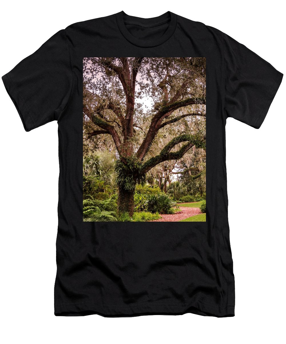 Oak Tree Men's T-Shirt (Athletic Fit) featuring the photograph Oak Tree by Zina Stromberg