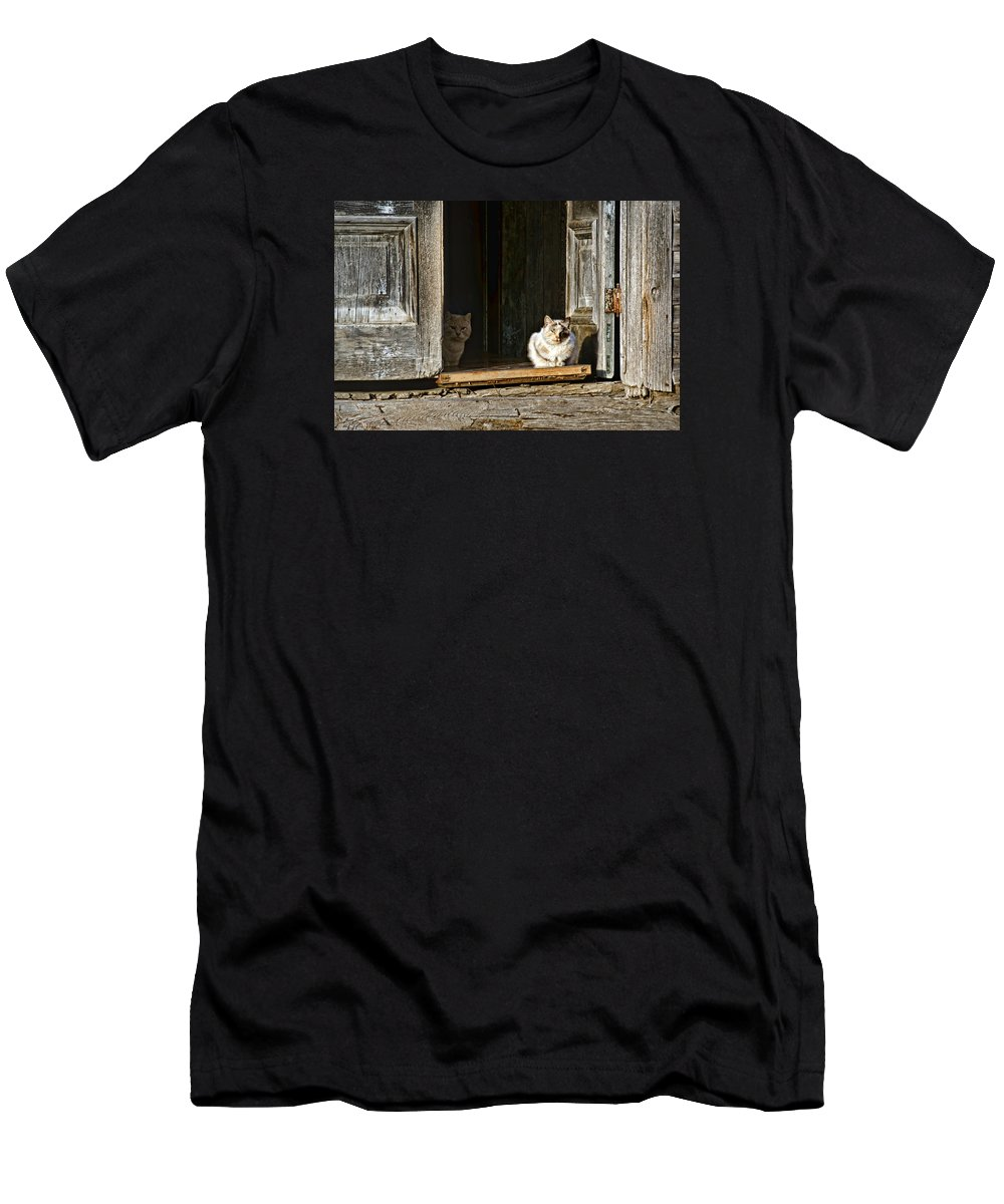 Cats Men's T-Shirt (Athletic Fit) featuring the photograph Old Knox Church Cats by Nikolyn McDonald