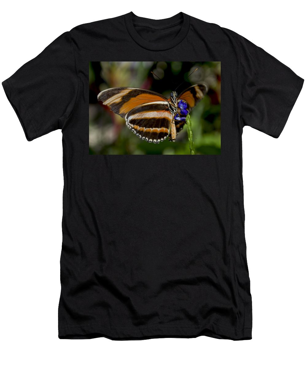 Orange Butterfly Men's T-Shirt (Athletic Fit) featuring the photograph Orange Banded Butterfly by Heather Applegate