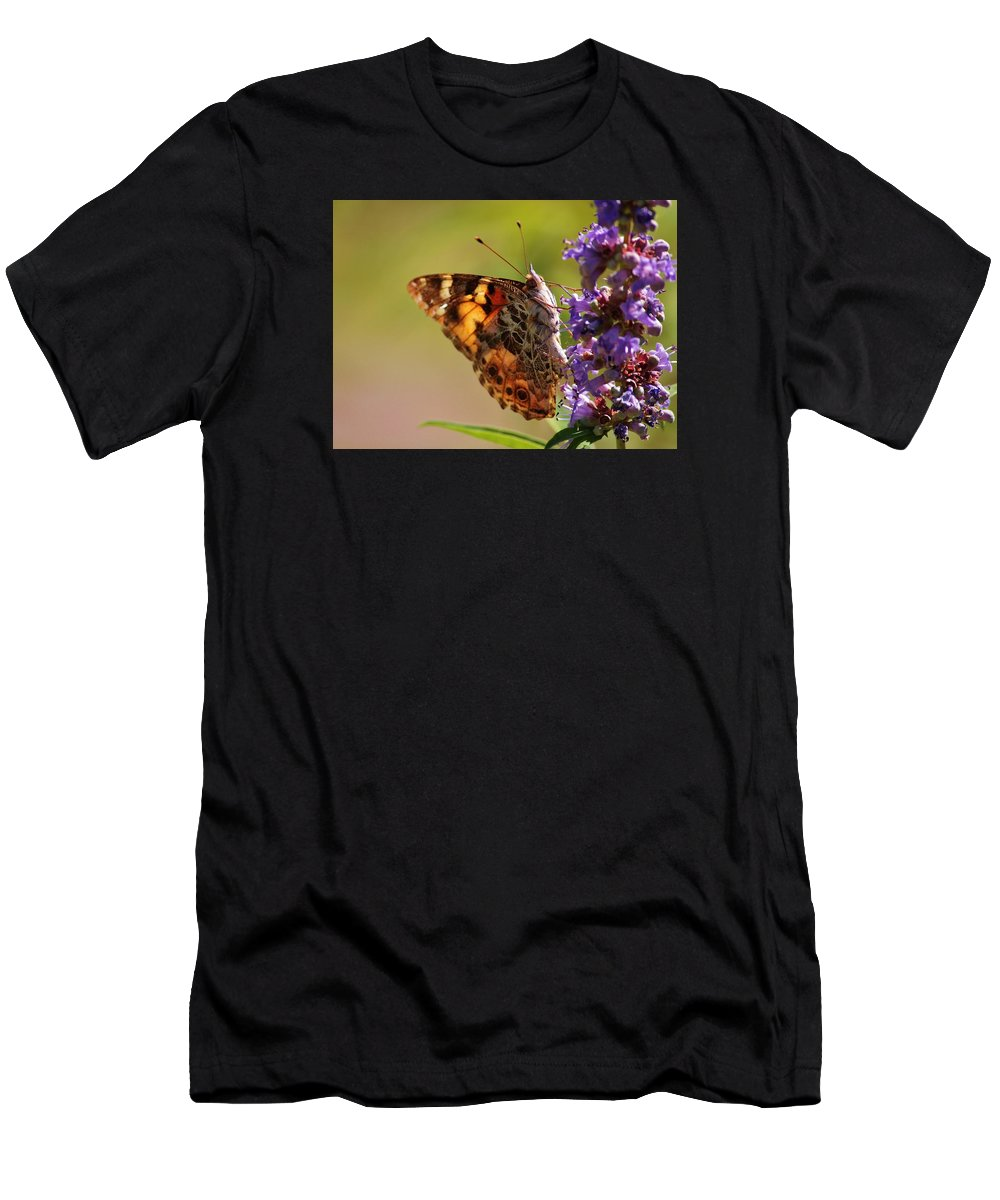 Butterfly Men's T-Shirt (Athletic Fit) featuring the photograph Painted Lady by Marcia Breznay