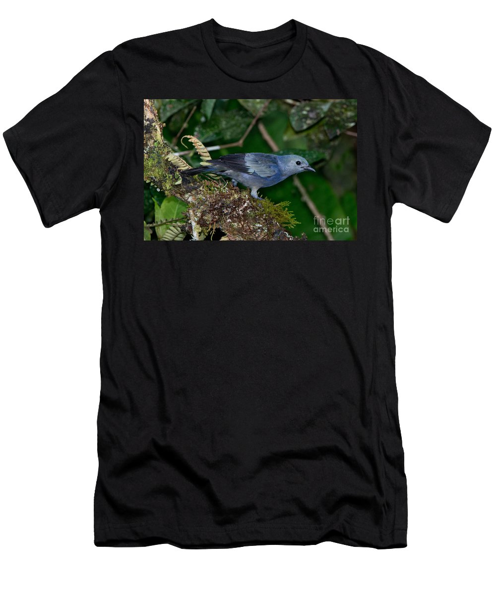 Palm Tanager Men's T-Shirt (Athletic Fit) featuring the photograph Palm Tanager by Anthony Mercieca