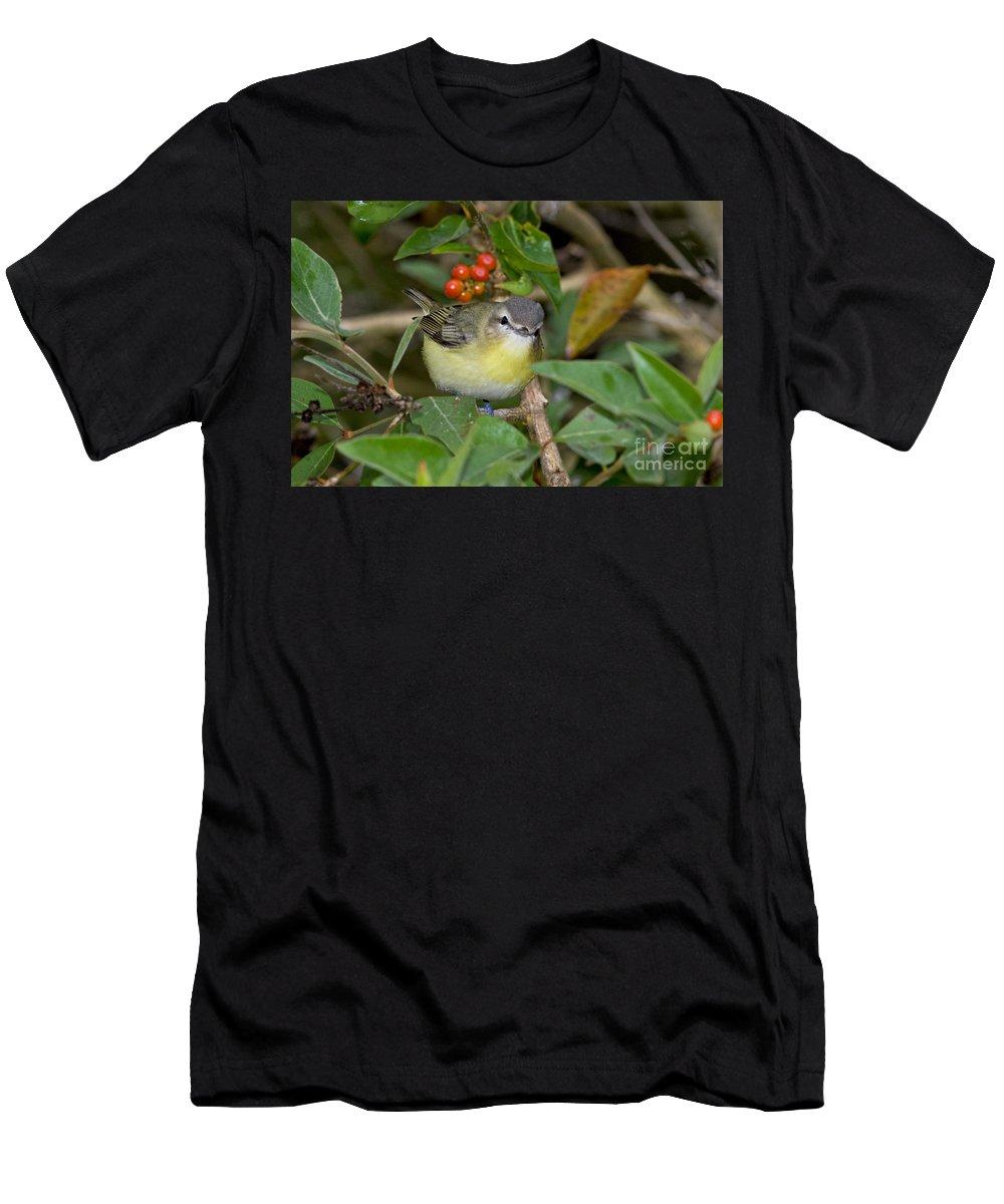 Philadelphia Vireo Men's T-Shirt (Athletic Fit) featuring the photograph Philadelphia Vireo by Anthony Mercieca