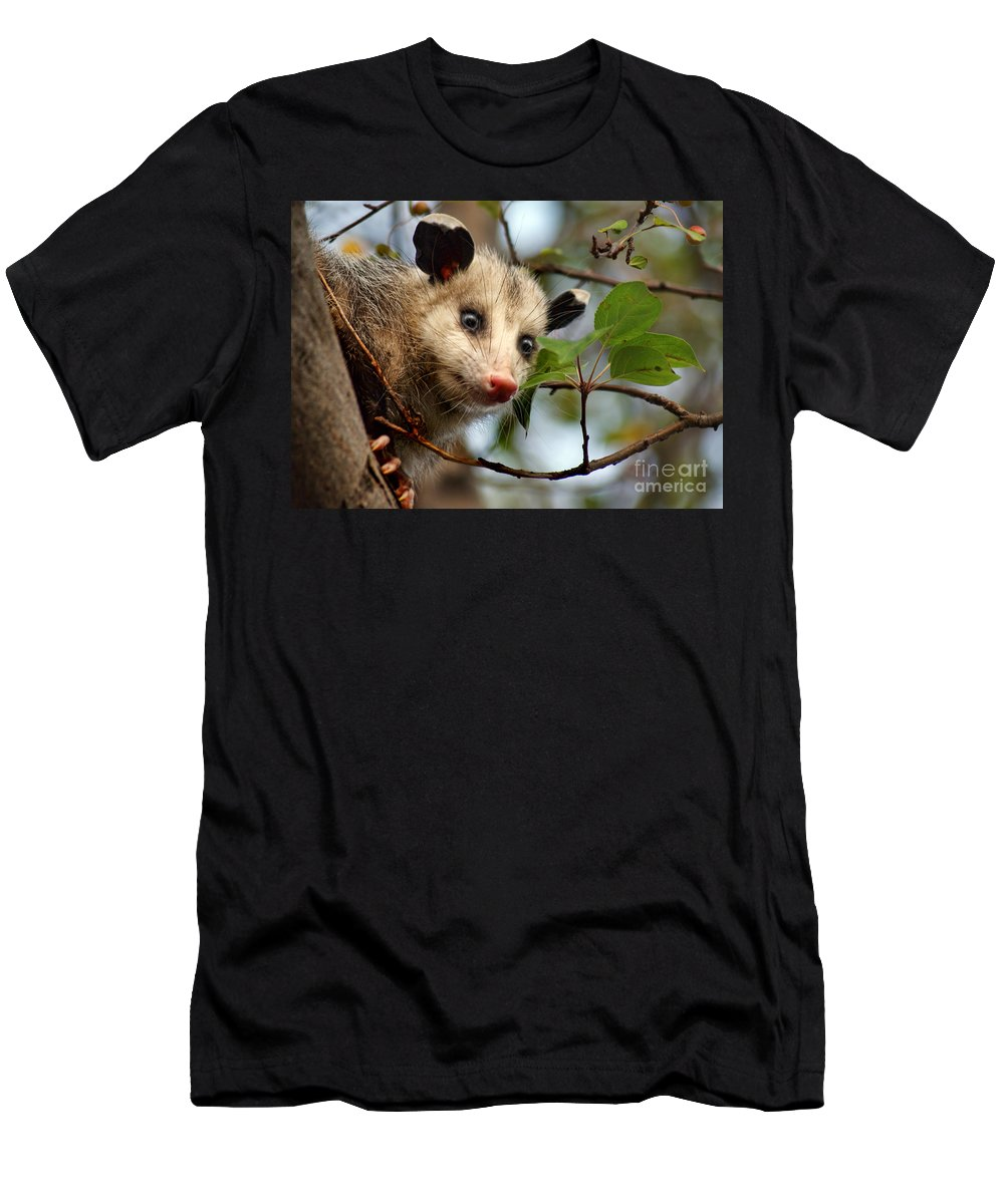 Animals Men's T-Shirt (Athletic Fit) featuring the photograph Playing Possum by Nikolyn McDonald