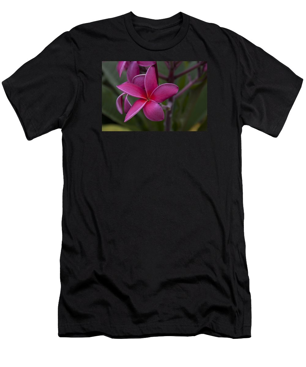 Plumeria Men's T-Shirt (Athletic Fit) featuring the photograph Plumeria by Randy Bayne