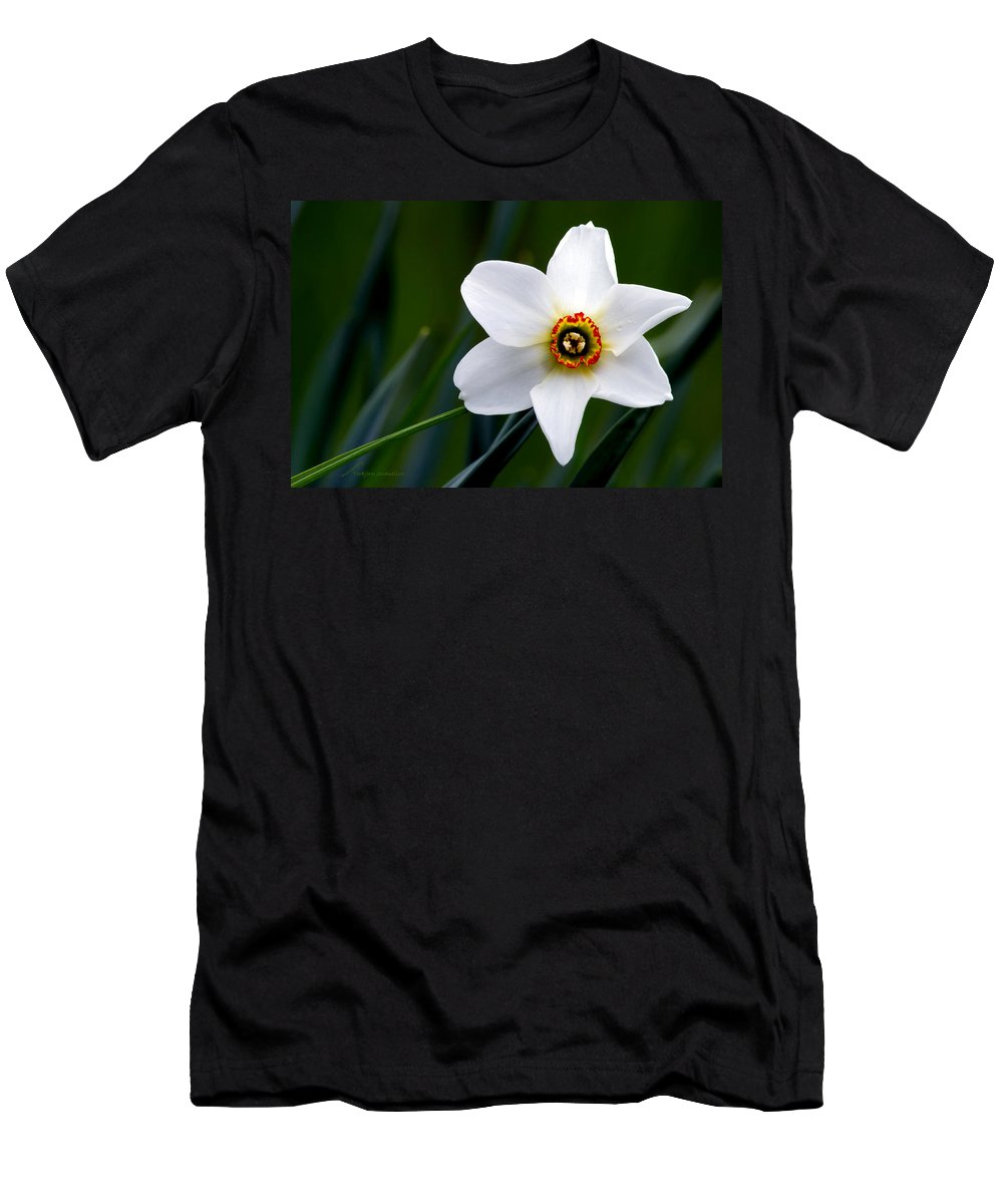 Poet's Daffodil Men's T-Shirt (Athletic Fit) featuring the photograph Poet's Daffodil by Torbjorn Swenelius