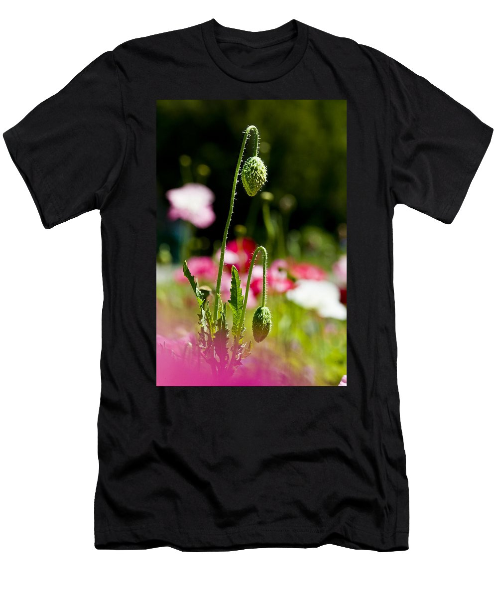 Poppies Men's T-Shirt (Athletic Fit) featuring the photograph Poppy Getting Ready by Rich Franco