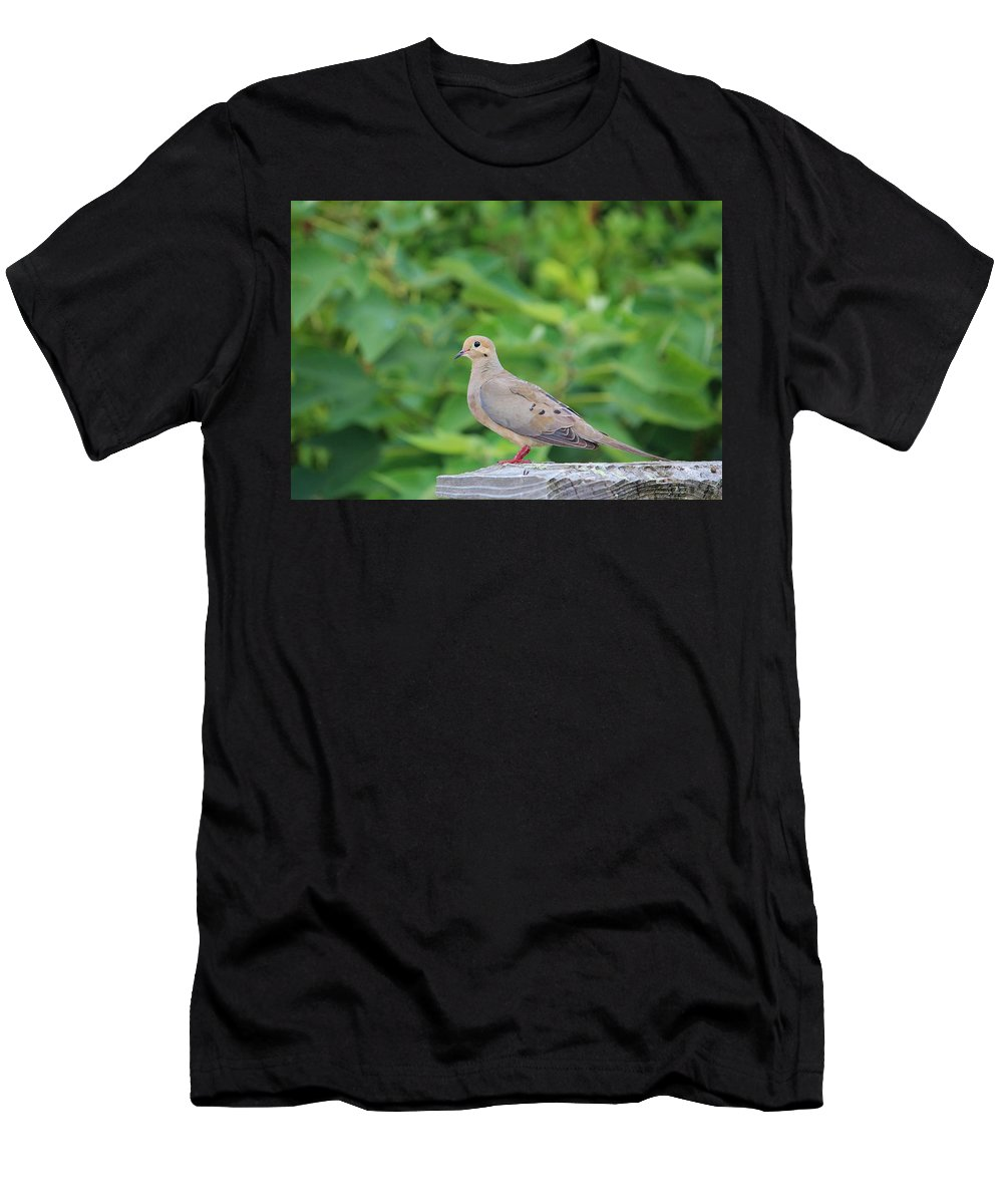 Birds Men's T-Shirt (Athletic Fit) featuring the photograph Pretty Dove by Cynthia Guinn
