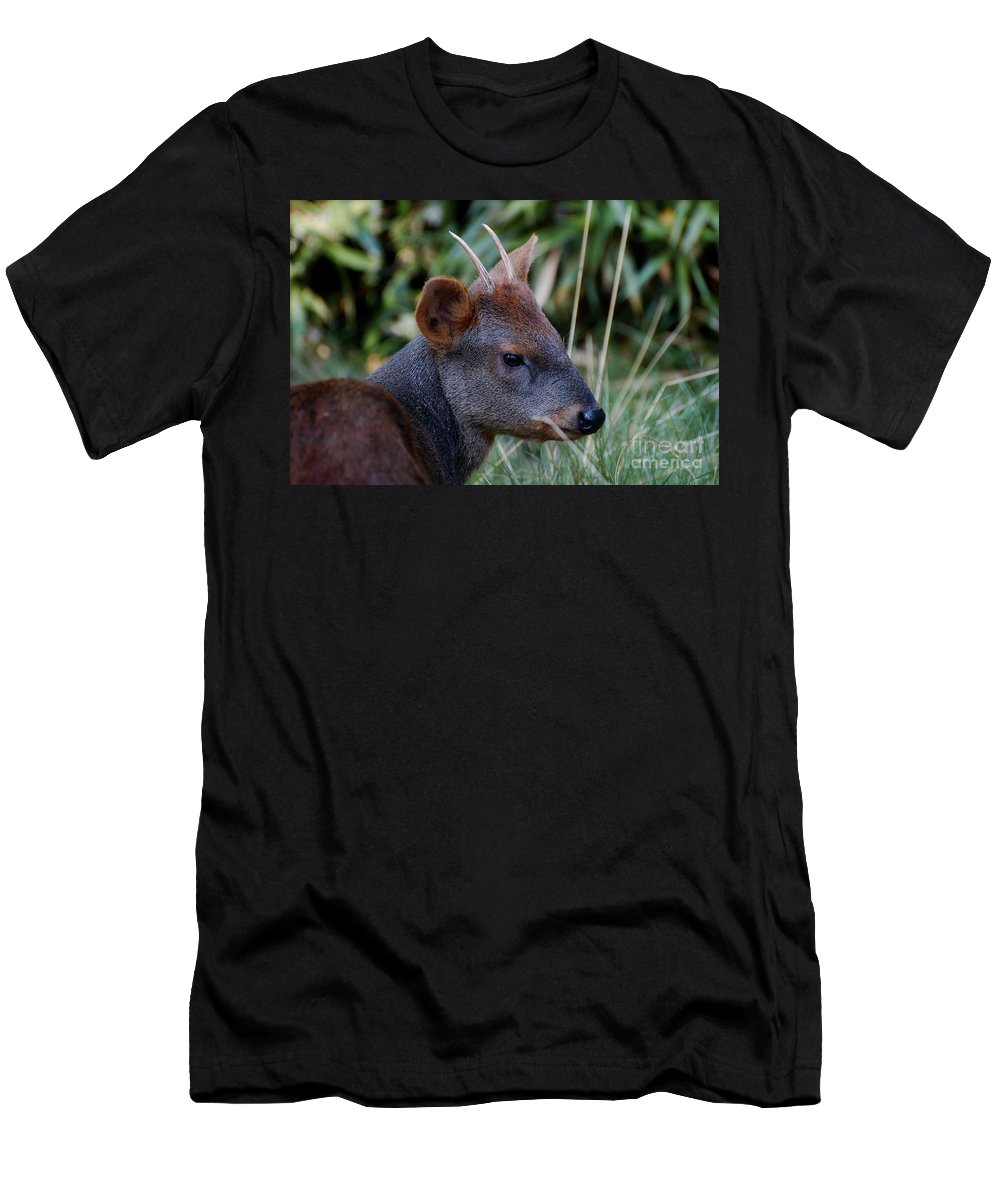 Deer Men's T-Shirt (Athletic Fit) featuring the photograph Pygmy Deer by Rich Priest