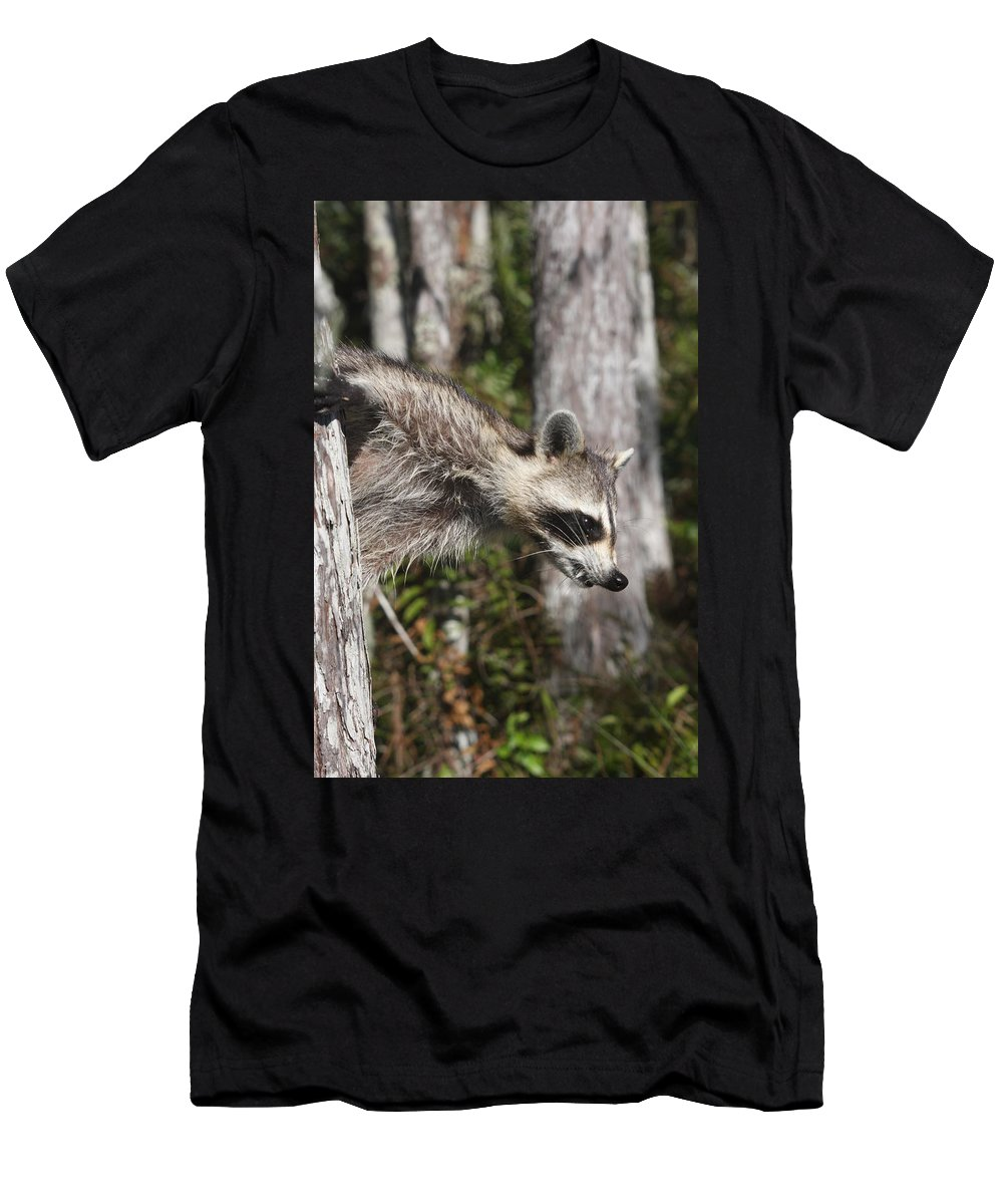 Raccoon Men's T-Shirt (Athletic Fit) featuring the photograph Raccoon by Christiane Schulze Art And Photography