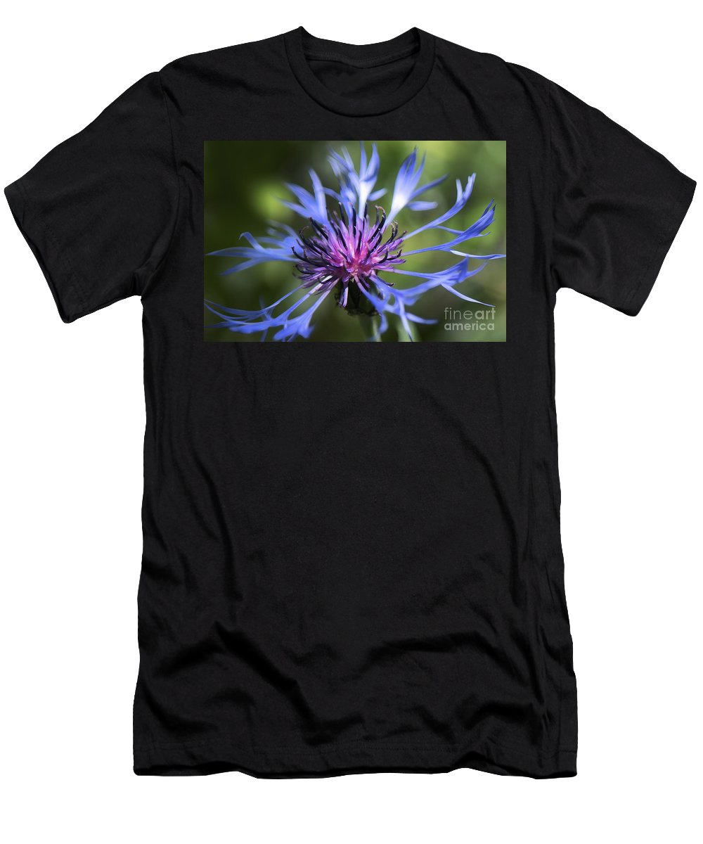 Bachelor's Button Men's T-Shirt (Athletic Fit) featuring the photograph Radiant Flower by Belinda Greb