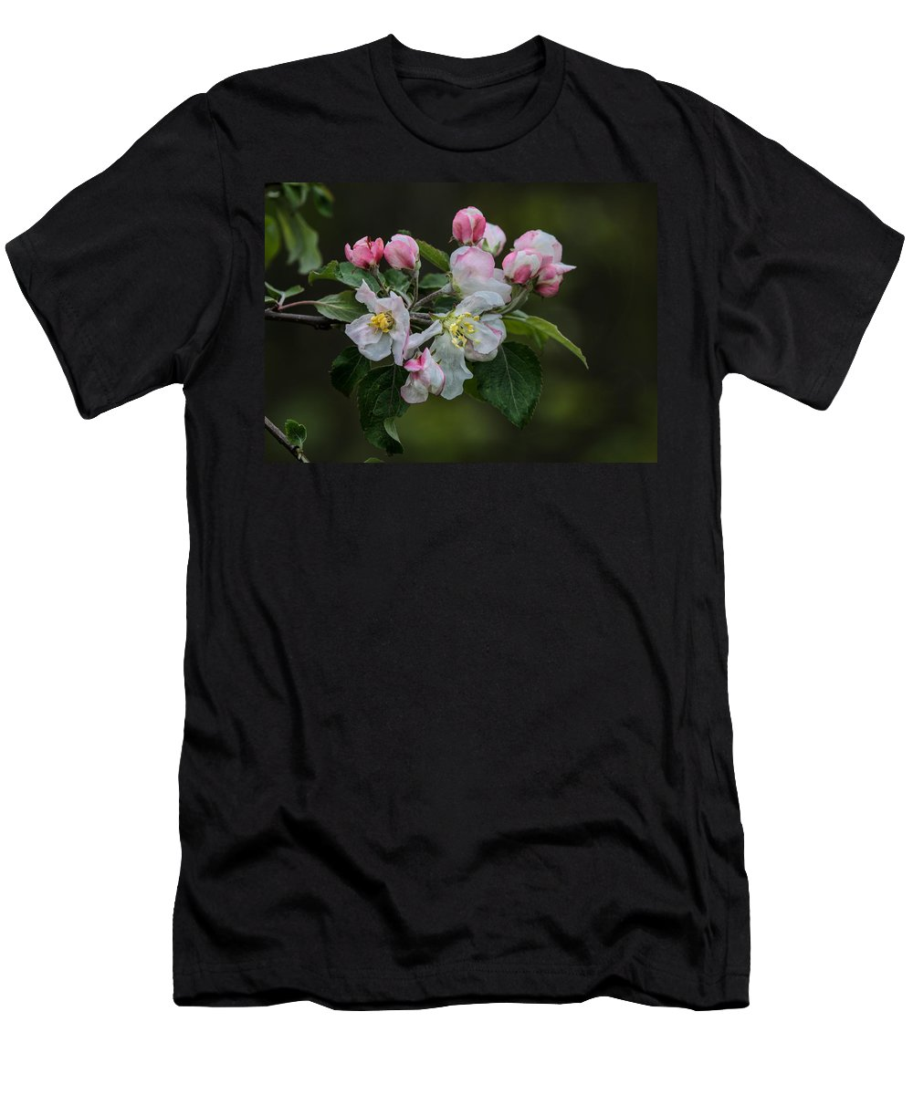 Appleblossoms Men's T-Shirt (Athletic Fit) featuring the photograph Reaching Sunlight by Susan Capuano