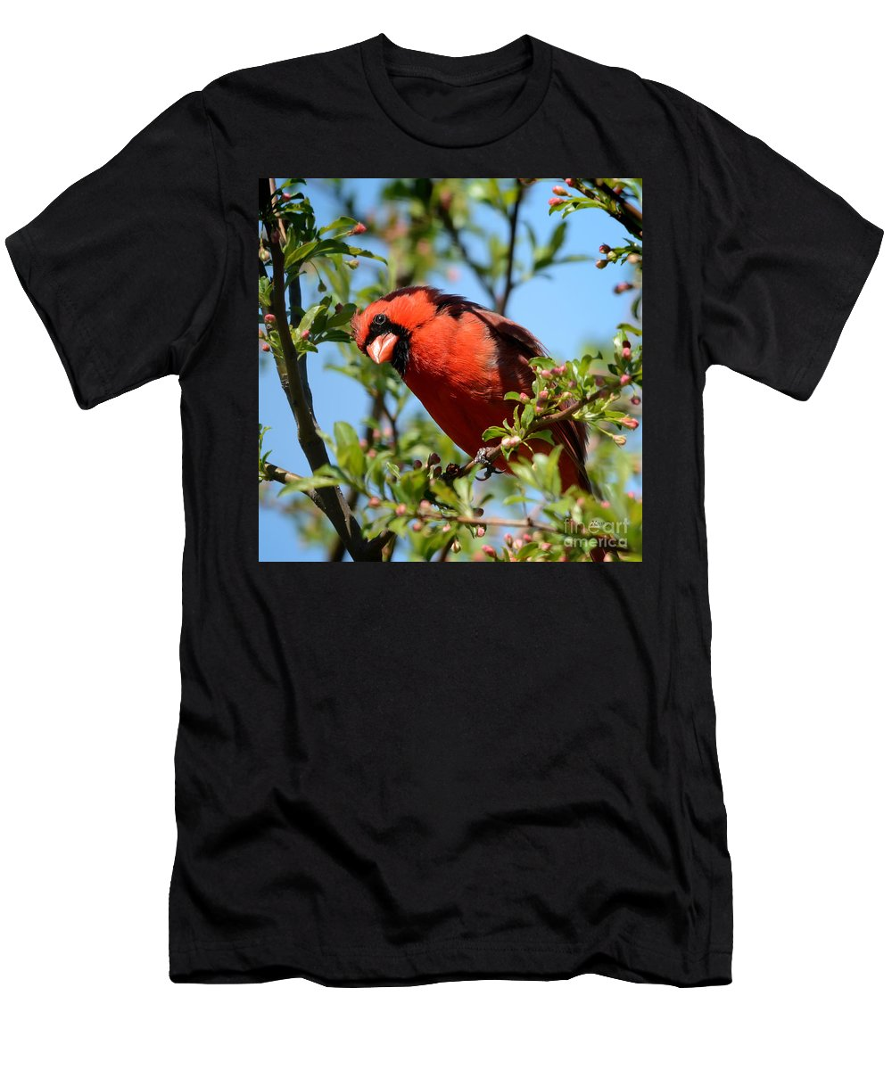 Nature Men's T-Shirt (Athletic Fit) featuring the photograph Red Cardinal In Springtime by Nava Thompson