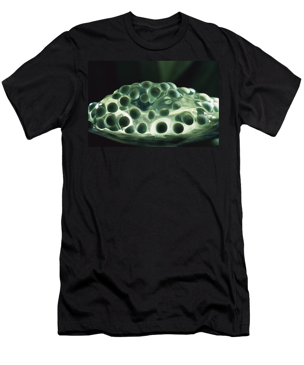 Feb0514 Men's T-Shirt (Athletic Fit) featuring the photograph Red-eyed Tree Frog Eggs by Heidi & Hans-Juergen Koch
