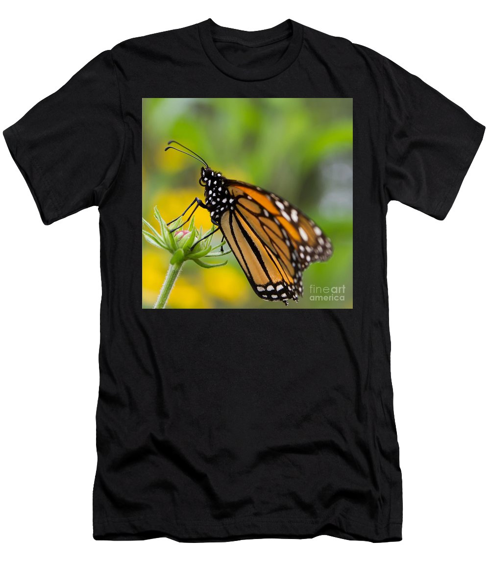 Monarch Men's T-Shirt (Athletic Fit) featuring the photograph Resting Monarch Butterfly by Nikki Vig