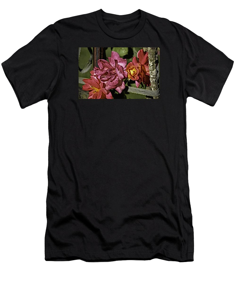 Parks Men's T-Shirt (Athletic Fit) featuring the photograph Roses On Trellis by Paul Shefferly