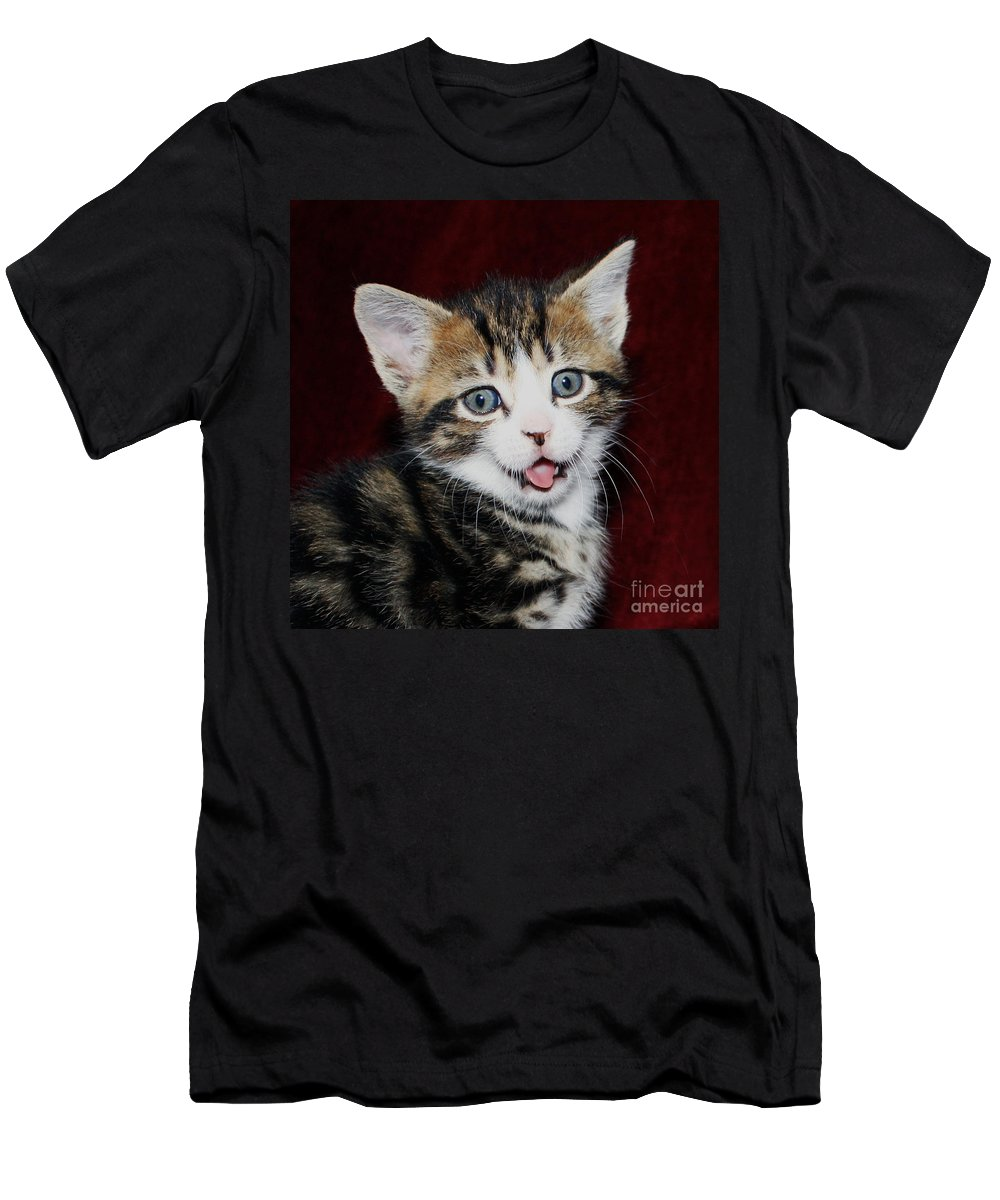 Naughty Kitten Men's T-Shirt (Athletic Fit) featuring the photograph Rude Kitten by Terri Waters