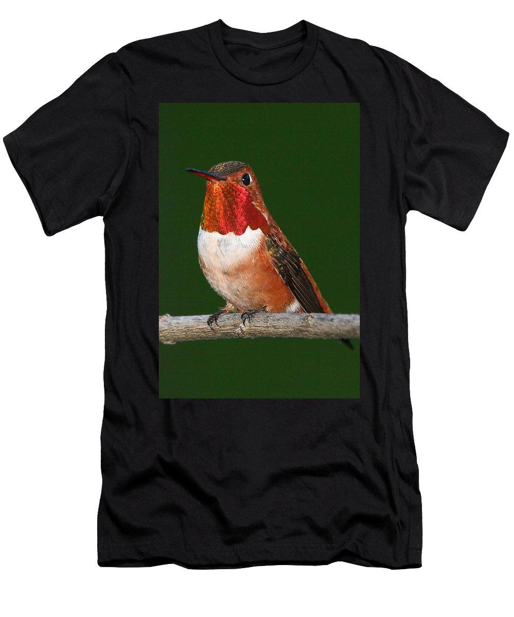 Hummingbird Men's T-Shirt (Athletic Fit) featuring the photograph Rufous Hummingbird by Paul DeRocker