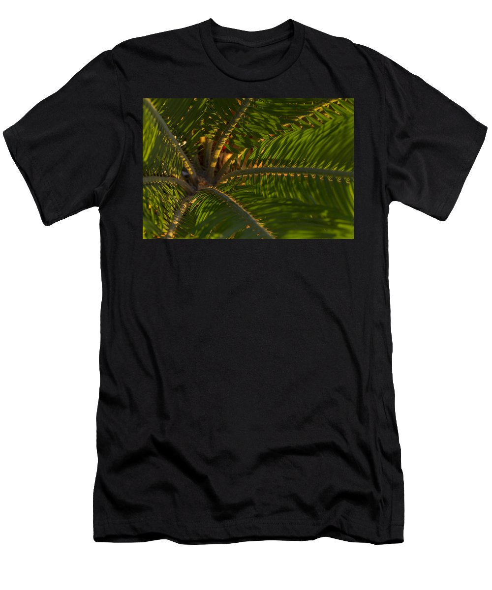 Palm Men's T-Shirt (Athletic Fit) featuring the photograph Sago Symmetry 1 by Scott Campbell