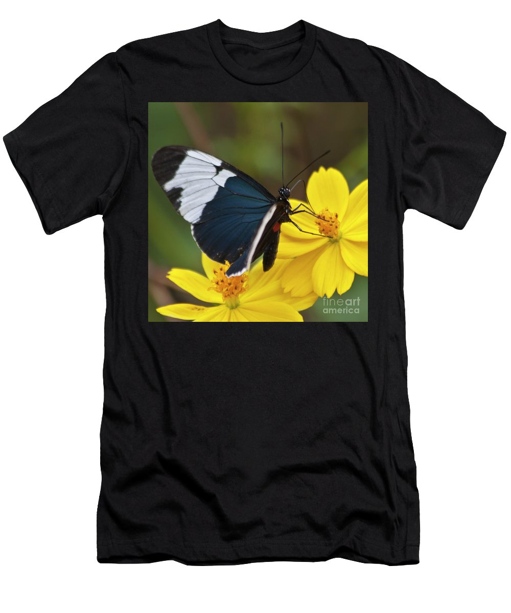 Butterfly Men's T-Shirt (Athletic Fit) featuring the photograph Sapho Longwing Yellow Oriented by Heiko Koehrer-Wagner