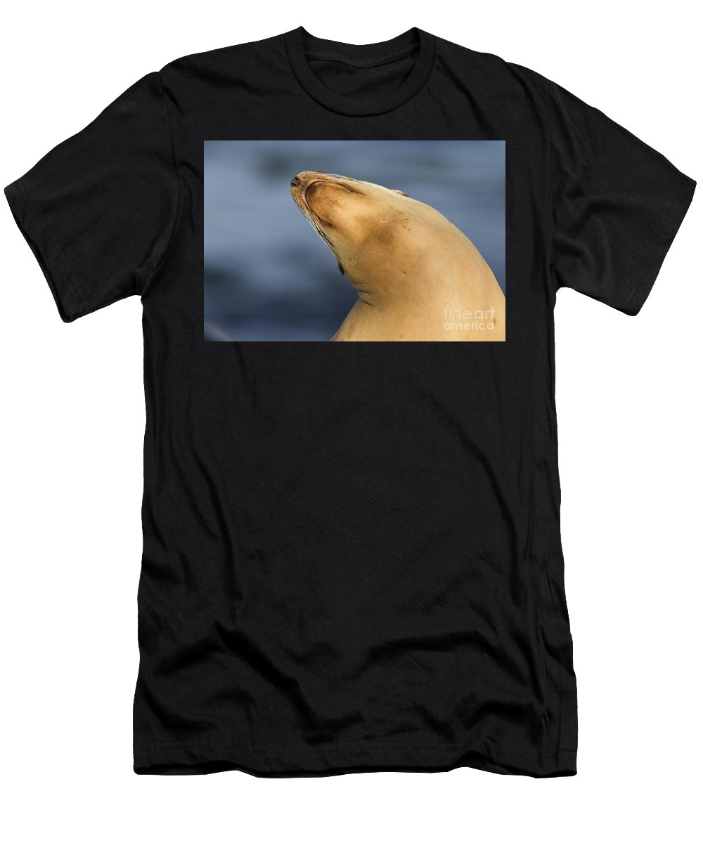 Sea Lion Men's T-Shirt (Athletic Fit) featuring the photograph Sea Lion Stretch by Bryan Keil