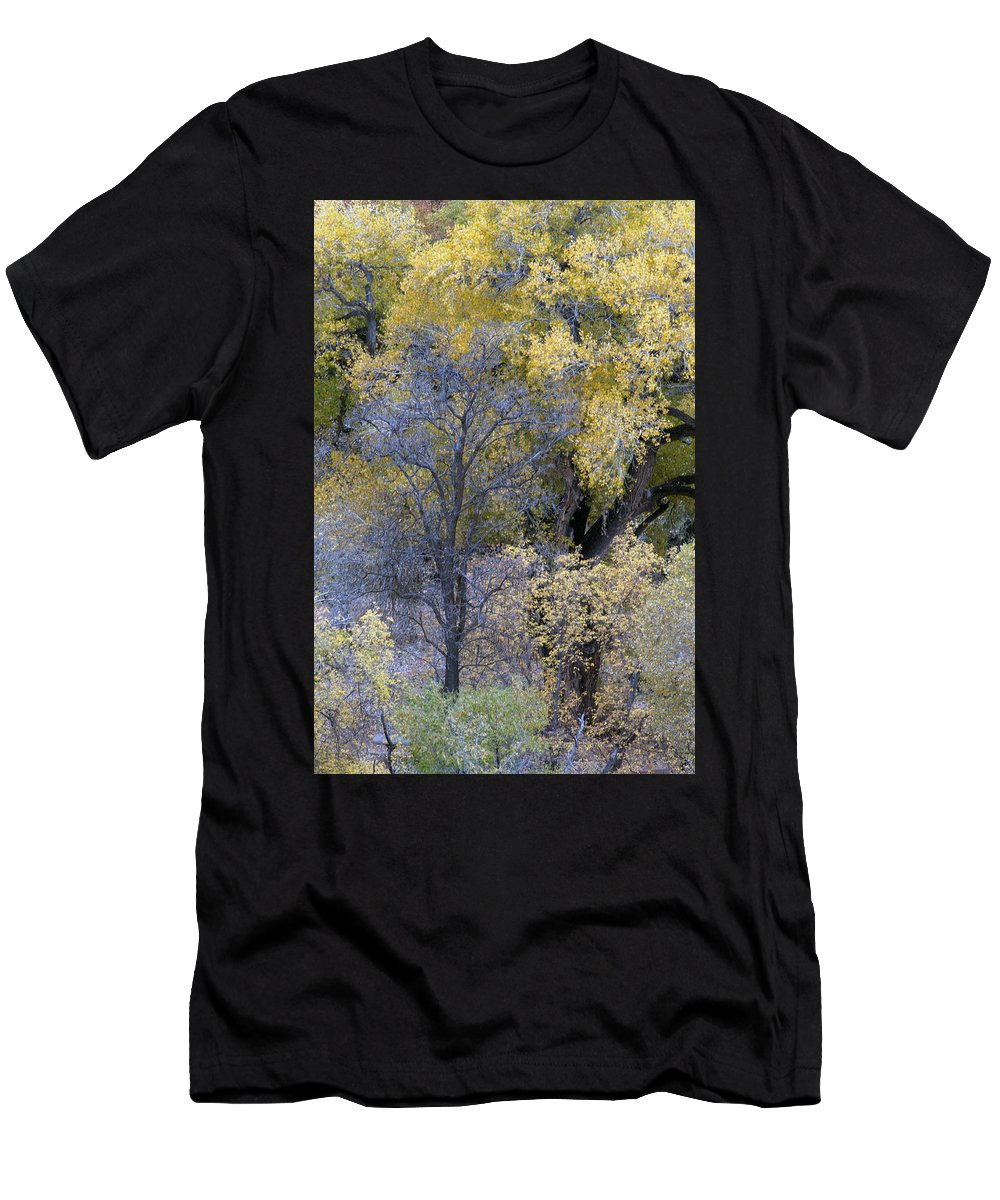 Fall Color Men's T-Shirt (Athletic Fit) featuring the photograph Sedona Fall Color by Tam Ryan