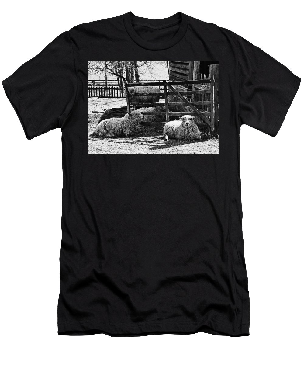 Sheep Men's T-Shirt (Athletic Fit) featuring the photograph Sheep by Nicole Lambert