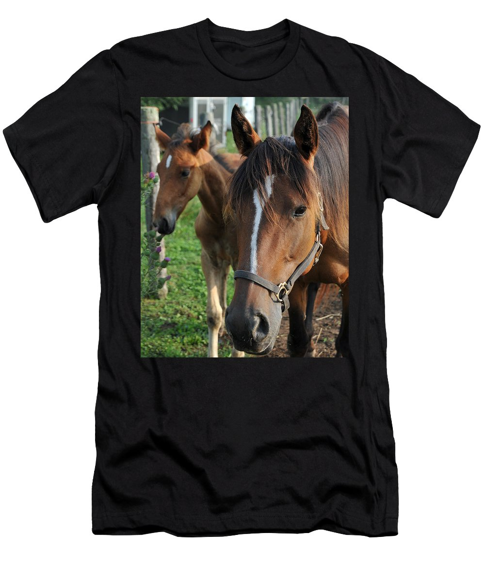 Horse Men's T-Shirt (Athletic Fit) featuring the photograph Shy Guy by Gene Tatroe