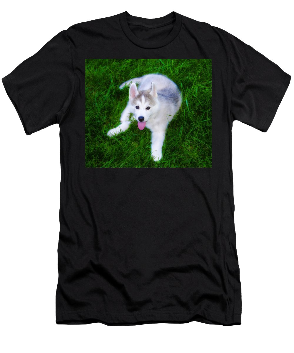 Siberian Men's T-Shirt (Athletic Fit) featuring the photograph Siberian Huskie by Bill Cannon