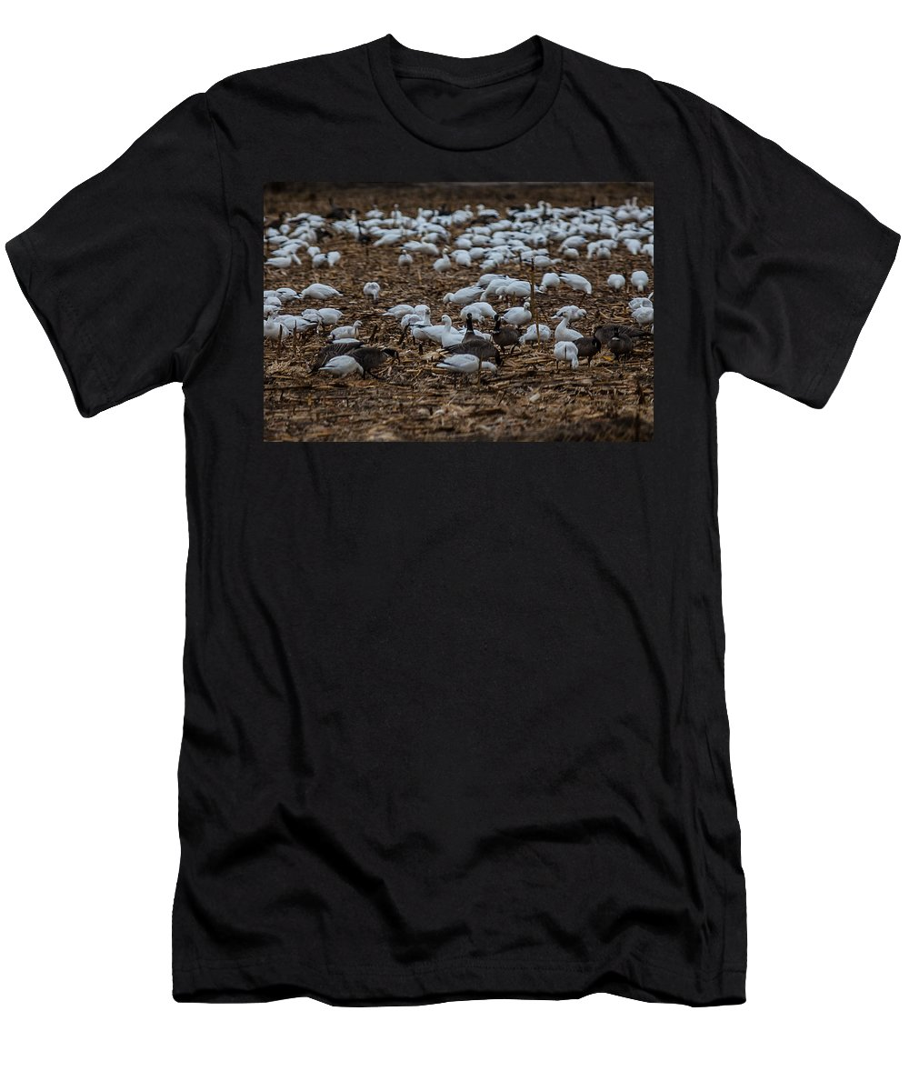 Geese Feeding Men's T-Shirt (Athletic Fit) featuring the photograph Snows And Aleutians Feeding by Brian Williamson