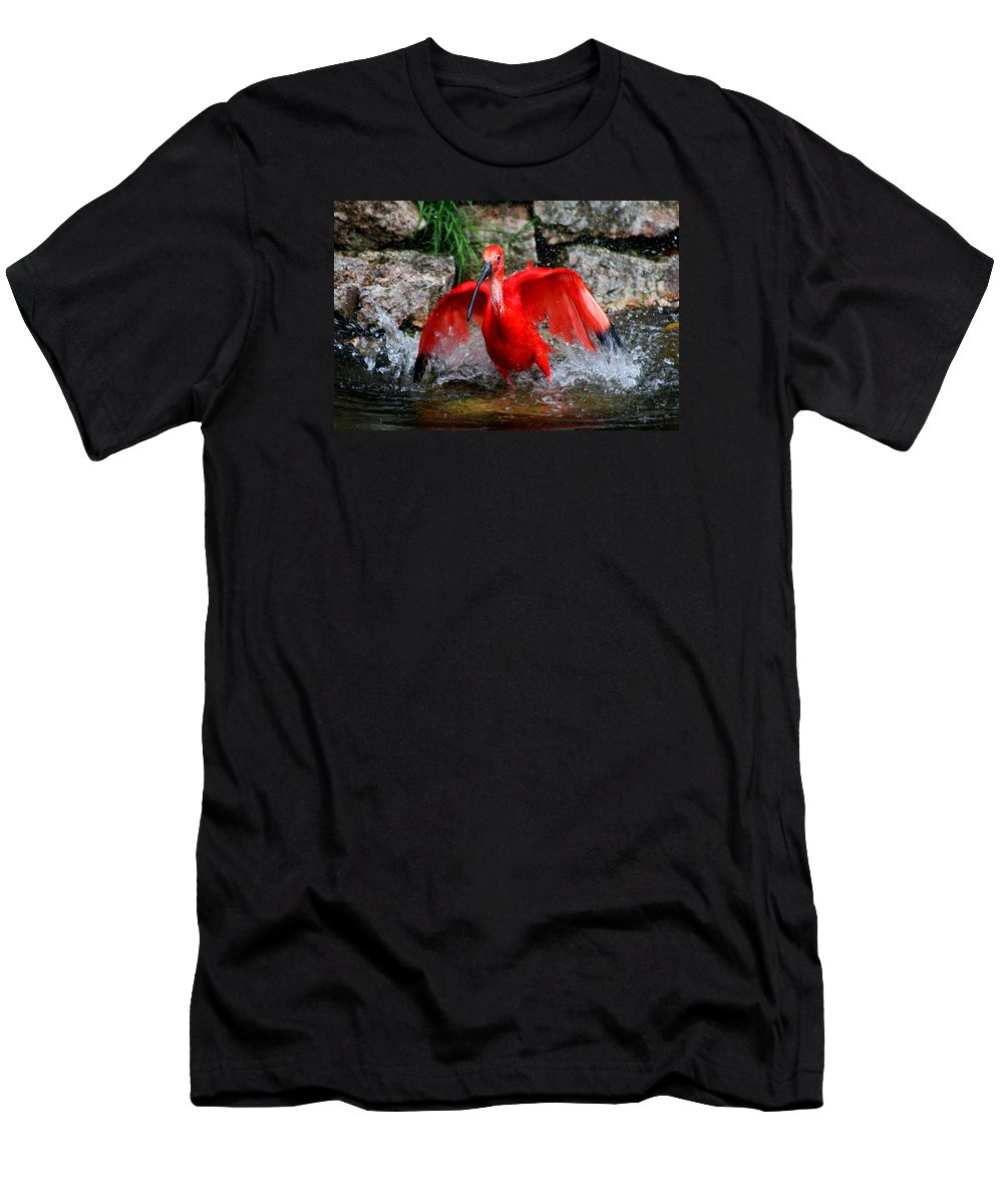 Red Ibis Men's T-Shirt (Athletic Fit) featuring the photograph Splish Splash - Red Ibis by Christiane Schulze Art And Photography