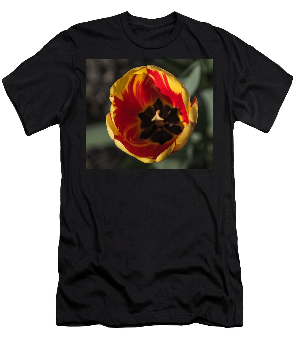 Tulip Men's T-Shirt (Athletic Fit) featuring the photograph Spring Is Here by Photographic Arts And Design Studio