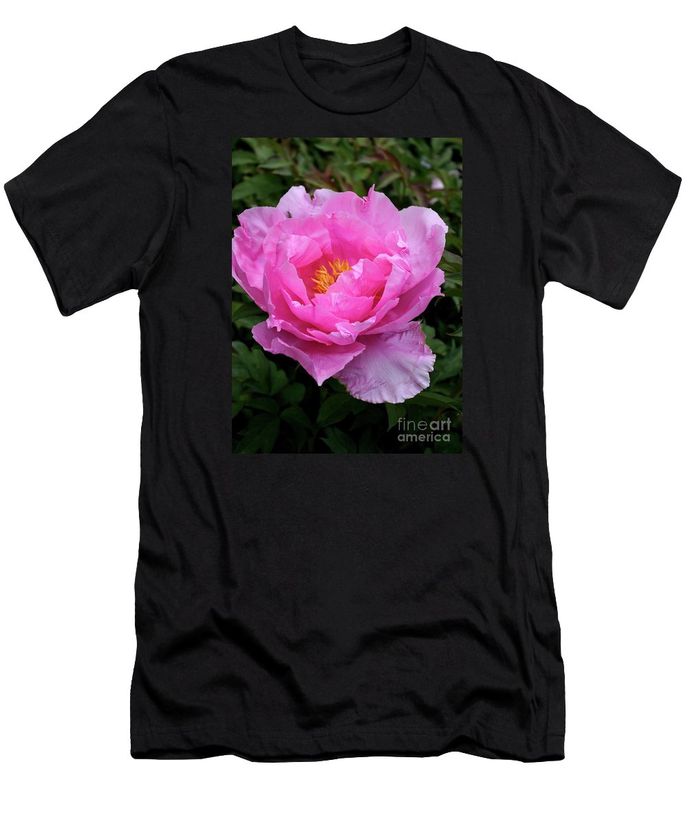 Peony Men's T-Shirt (Athletic Fit) featuring the photograph Spring Passion by Christiane Schulze Art And Photography