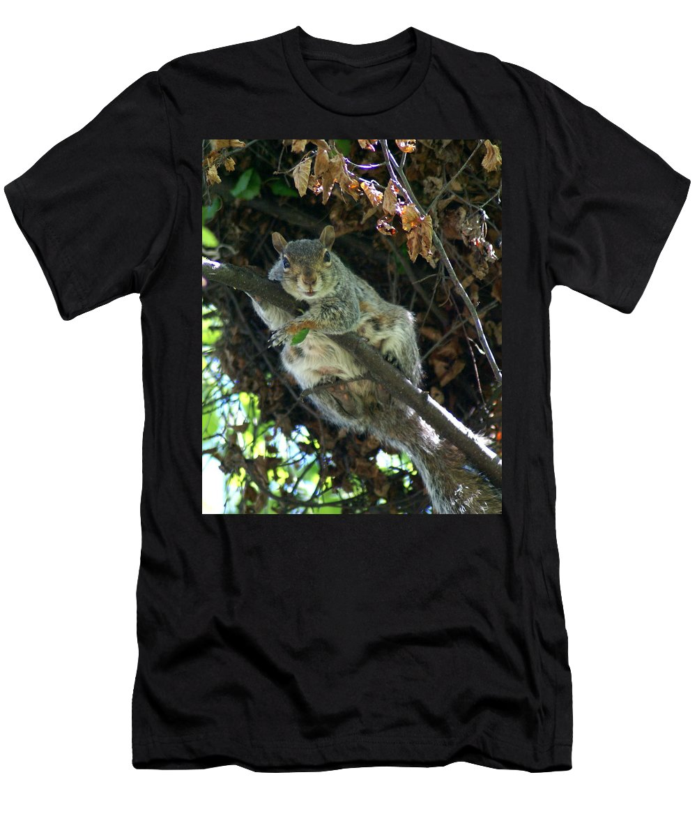 Squirrels Men's T-Shirt (Athletic Fit) featuring the photograph Squirrel By Nest by Ben Upham III