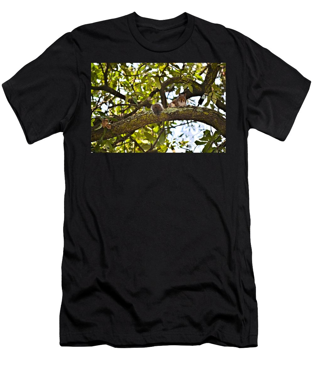 Squirrel Men's T-Shirt (Athletic Fit) featuring the photograph Squirrel On A Branch by Tara Potts