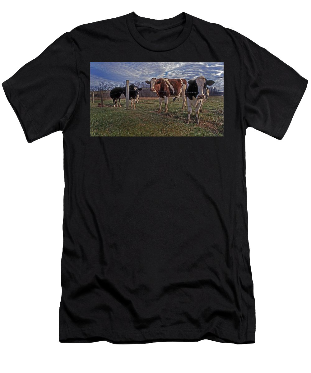 Cows Men's T-Shirt (Athletic Fit) featuring the photograph Stand Yer Ground by Skip Willits