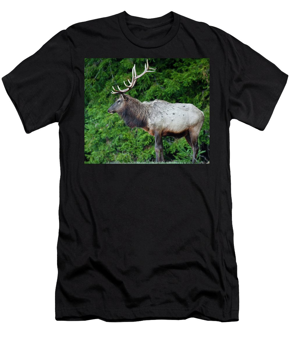 Roosevelt Elk Men's T-Shirt (Athletic Fit) featuring the photograph Standing Proud by Greg Nyquist
