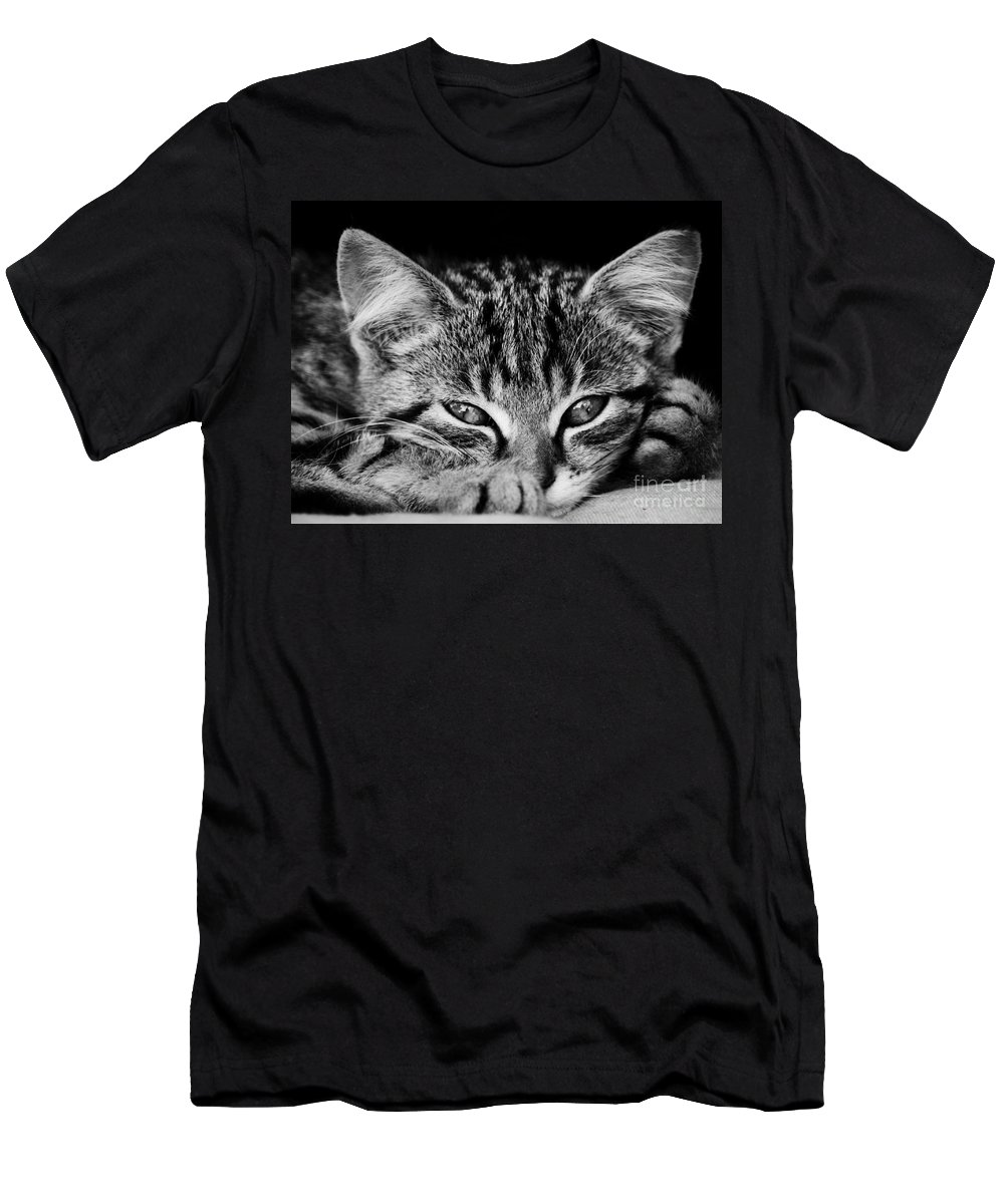 Kitten Men's T-Shirt (Athletic Fit) featuring the photograph Stray Kitten by Brothers Beerens